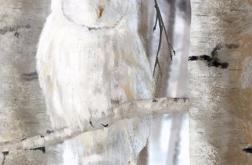 Obraz - Biała sowa - 40x28