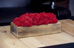 Mech chrobotek w szczotkowanej donicy - Red