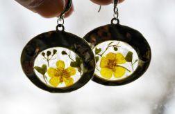 Zatopki kwiaty jaskra