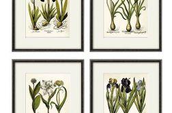 Kwiaty wydruk grafika wydruk vintage obraz