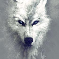 Obraz - Biały wilk - płótno - malowany
