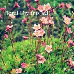 flowersdreams