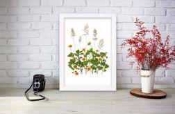 Obrazek A4 Prawdziwe suszone kwiaty 002