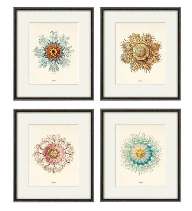 Plakat koralowce  grafika muszle  prezent