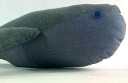 Wieloryb Danio