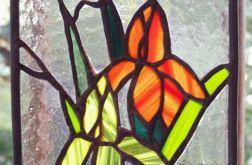 Kwiaty irysy