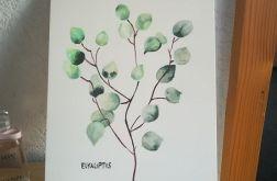 Eukaliptus dekoracja