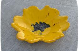 Misa żółty kwiat