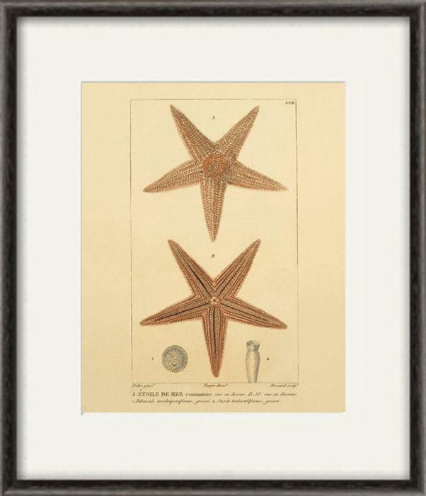 Ocean rozgwiazda koralowiec muszle 6 x A4 -