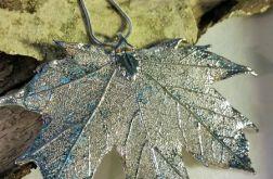 Klon zwyczajny w srebrze