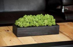 Chrobotek reniferowy w czarnej donicy - Green
