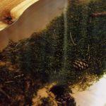 Stolik,orzech włoski z mchem/żywica
