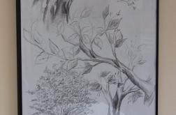 Studium drzewa ołówek, obramowany 70x100
