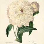 Grafika Kwiaty wydruk  plakat vintage wydruk -