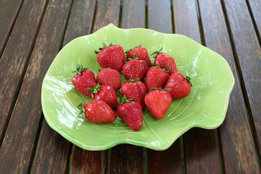 Patera liść hosty zieleń majowa - patera liść hosty na pomidory